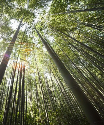 bambu como ingrediente protector del cabello